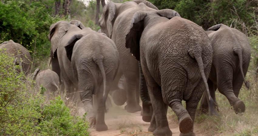 7 Days Rwanda Safari