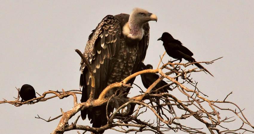 4 Days Chimpanzee Trekking and Bird Watching in Uganda