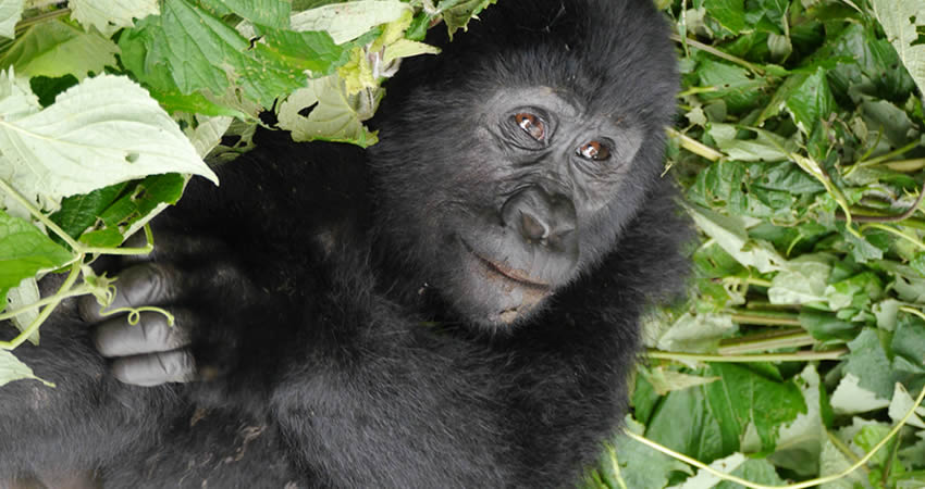 6 Days Gorillas and Wildlife Rwanda