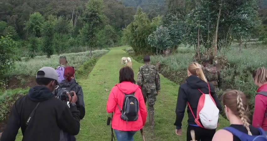 2 Days Mount Karisimbi Hike