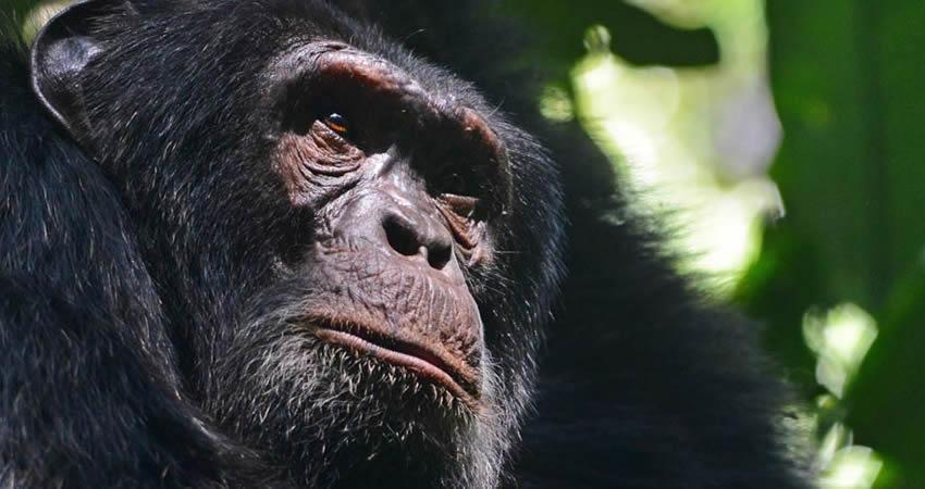 3 Days Chimps and Wildlife Safari