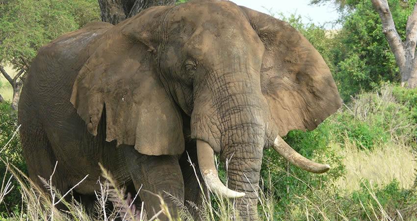 5 Days Kidepo National Park and Sipi Falls Safari